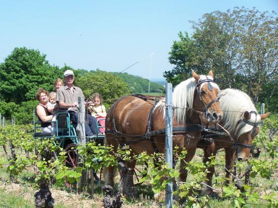 Promenade dans les vignes à Offlanges.