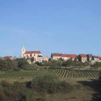 Les vignes de Jean-marie à Offlanges.